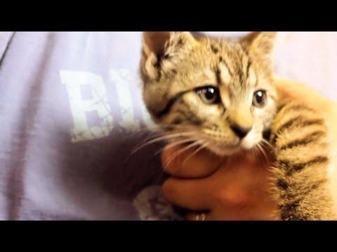 Stray Kitten Adopts Our Family