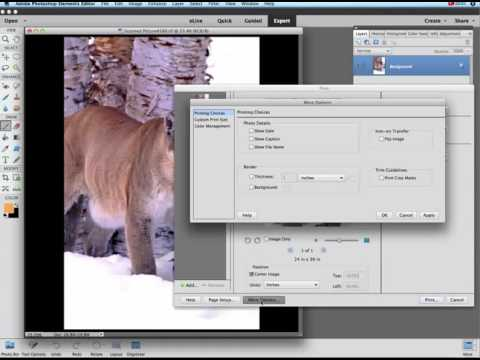 Photoshop Elements 14 - Working with color profiles