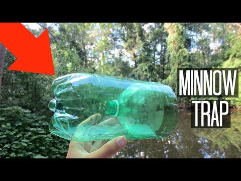 Minnow Trapping!! Homemade 2-Liter Trap! (Surprise Catch!)