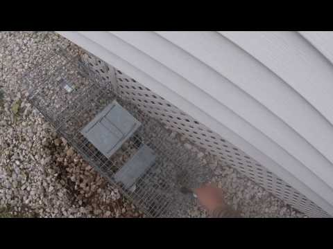 Animal Bait Review On-Target Baits - Grub Paste & Honey Gland Skunk baits.