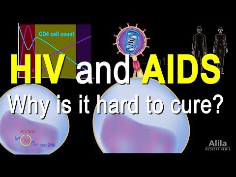 HIV and AIDS: Infection Stages, Pathology and Treatment, Animation