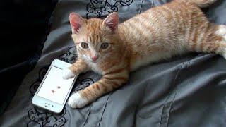 Kitten watch Khmer Horror Movie 😂🐈📱👻😘