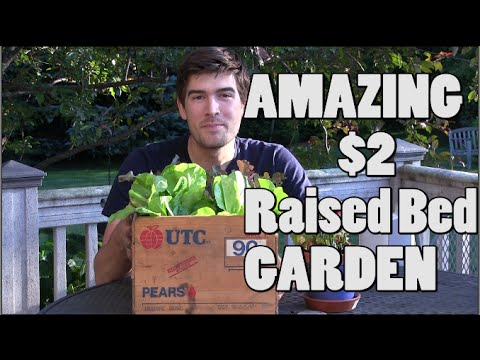 Amazing $2 Raised Bed ANYONE Can Build!