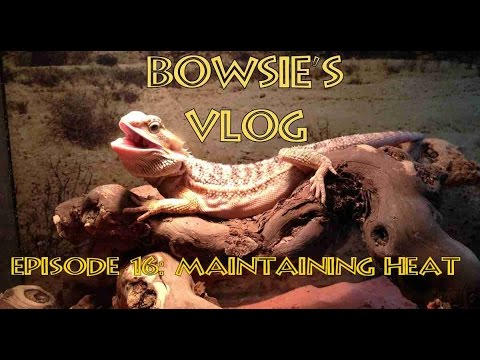 Bowsie's Vlog 16 - Maintaining Heat