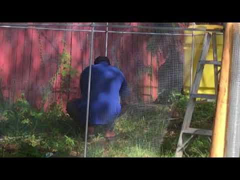 Outdoor Aviary Build