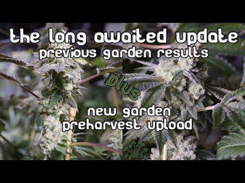 New GG#4 (& more) garden; day 66 pre-harvest video/updates from last garden!