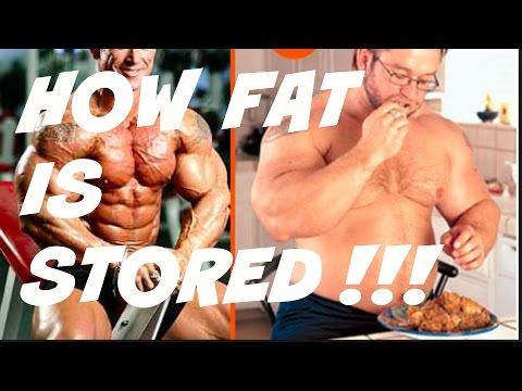 HOW YOUR BODY STORES FAT !!!