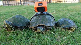 Turtle Racing!
