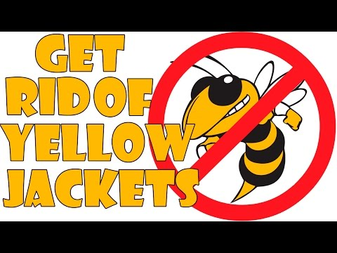 easiest and cheapest way to get rid of yellow jackets