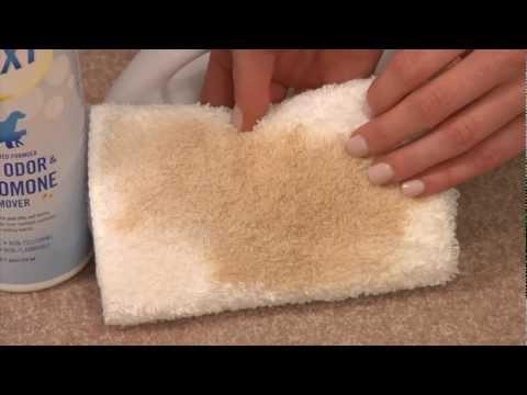 Get Rid of Pet Urine! 180XT Stain, Odor & Pheromone Remover
