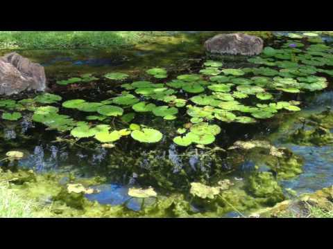 How to Control Pond Algae ?