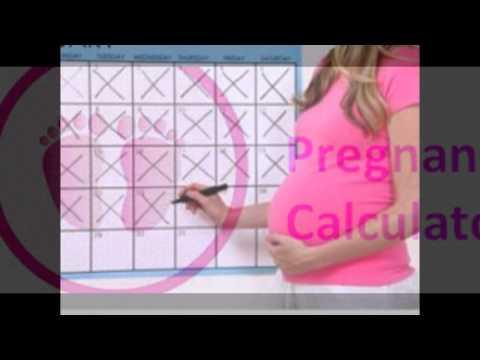 Pregnancy calculator