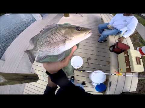 Dock Fishing For Mangrove Snappers