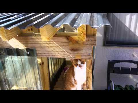 Best outside DIY cat house cathouse easy