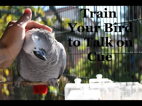 Train Your Parrot to Talk on Cue and Much More