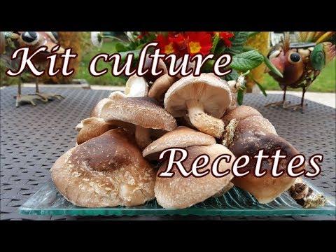 Shiitake du kit de culture à l'assiette ; voir pousser les champignons lentins du chêne