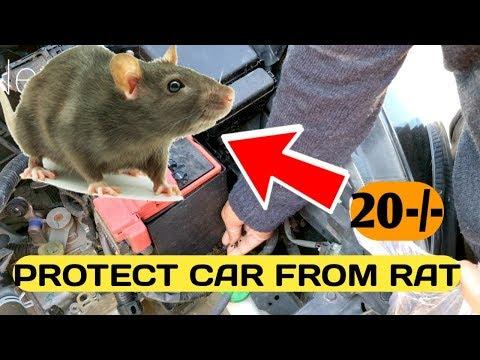 Protect CAR from RATS चूहों और Rodents से कैसे बचायें कार को Home पर ही Tobacco Way