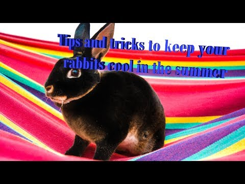 7 Tips for Cool Bunnies in Summer 🐰