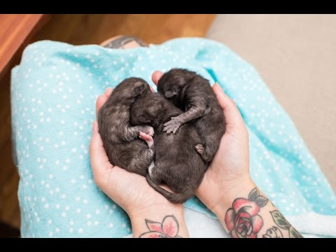 Rescuing Newborn Kittens