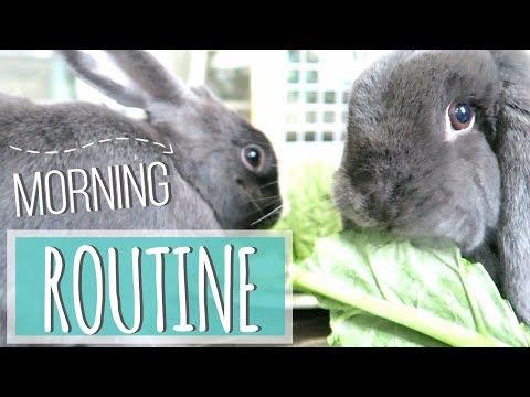 Rabbit Morning Routine 2017