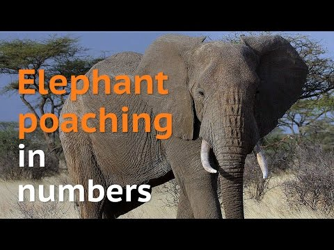 Elephant poaching in numbers