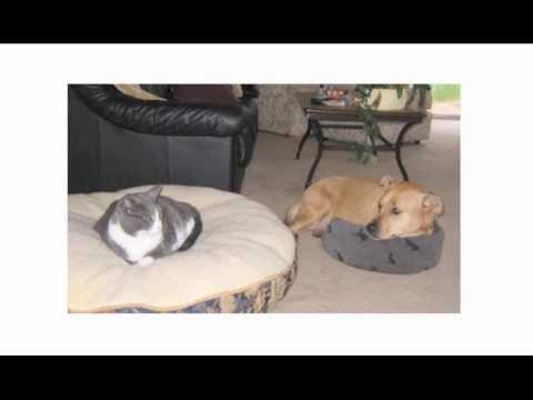 5 Reasons You Should Hire a Pet Sitter | 702-527-8070 |  Pet Sitters of Las Vegas | Las Vegas, NV