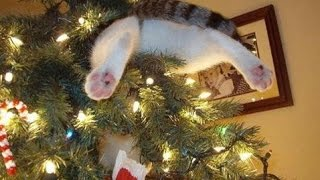 Funny Cats vs Christmas Trees - Funny Cats Christmas Compilation -  part 2