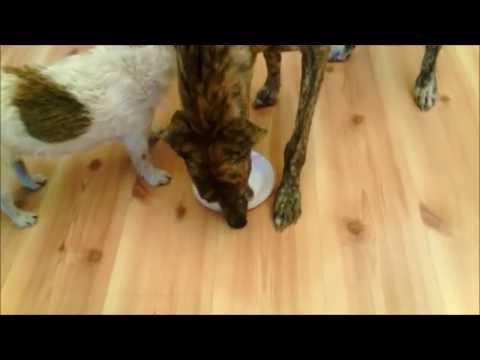 Easy Dog Diarrhea Treatment
