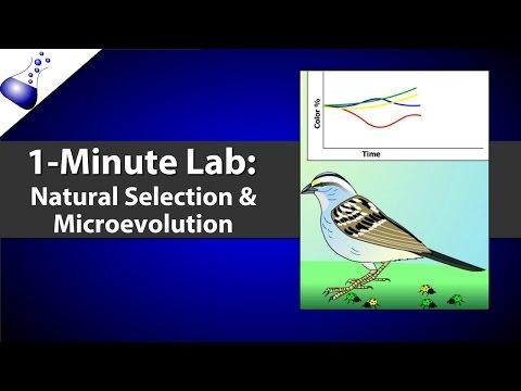 Natural Selection and Microevolution