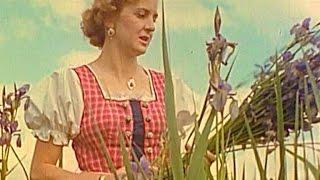 Hitler and Eva Braun's Disturbing Wedding