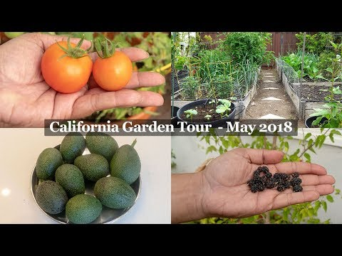 Monthly Gardening Series - The California Garden In May