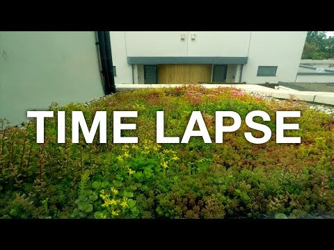 🌱 2 Month TIME LAPSE Sedum green roof build and growth