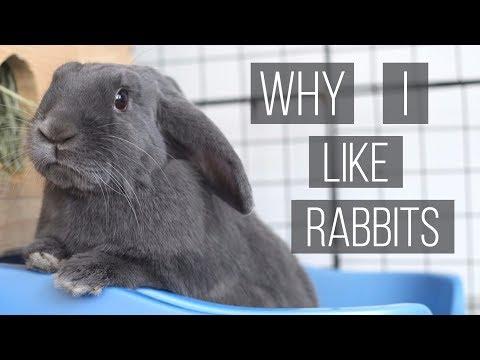 Why I Like Rabbits