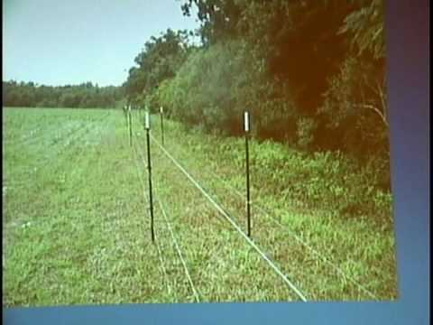 FERAL PIGS AND DEER CONTROLLED WITH MEGA FENCE, RICHARD PETCHER, EXT. AGRONOMIST, ALABAMA