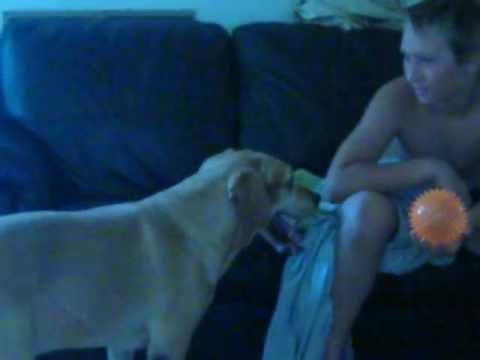 Help My Dog Won't Stop Humping Furniture  2