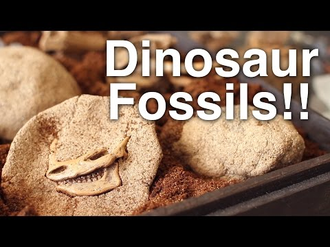 DIY Crack Open Dinosaur Fossils!!