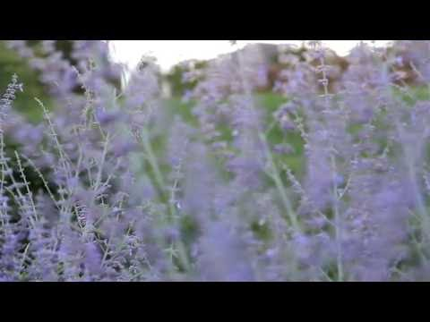 Canon EOS Rebel T5i (650D) Video Depth of Field & Bokeh Tests! (Background blur)