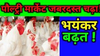 पोल्ट्री का नया रेट आपके होश उड़ा देगा | big rise in poultry update today