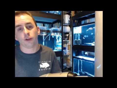 Live in the Fishroom! Answering your questions