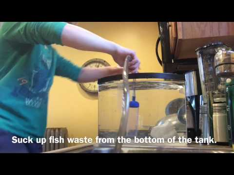 How to siphon a fish tank without getting poop in your mouth!