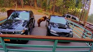20 WEIRD THINGS CAUGHT ON SECURITY CAMERAS & CCTV