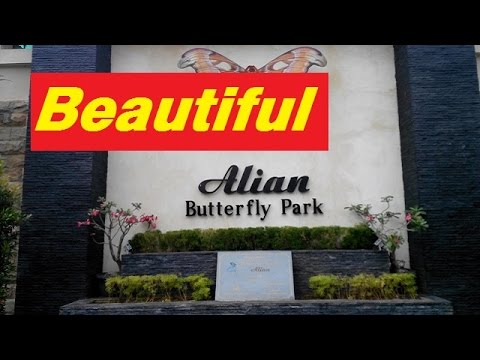 Alian Butterfly Park - Indonesia