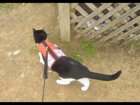 Search & Rescue Cat finds lost kitten (Lost Cat Finder Case Dec 21 2014)