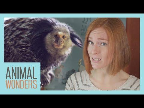 Pet Monkey?