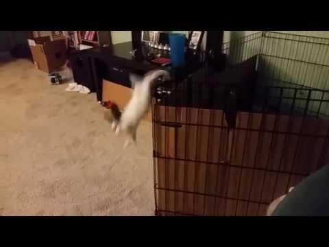 Rabbit 2 Fence 0