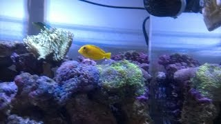 Reef Update # 11 New Tang And Supplies