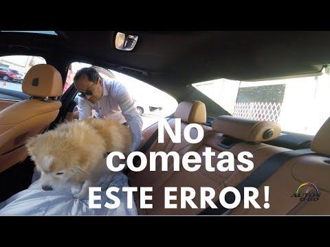 Consejos de seguridad para viajar con tu perro en el auto con la Dra. Marta Sánchez