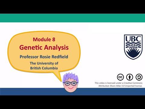 8G - Using crosses to investigate locations of autosomal genes