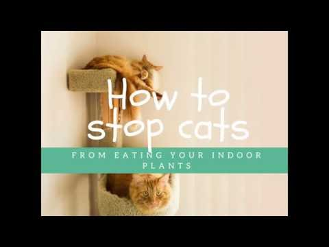 How To Stop Cats From Eating Indoor Plants