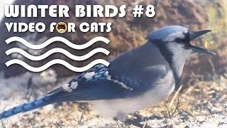 VIDEO FOR CATS TO WATCH: Winter Birds #8. Bird Video for Cats.
